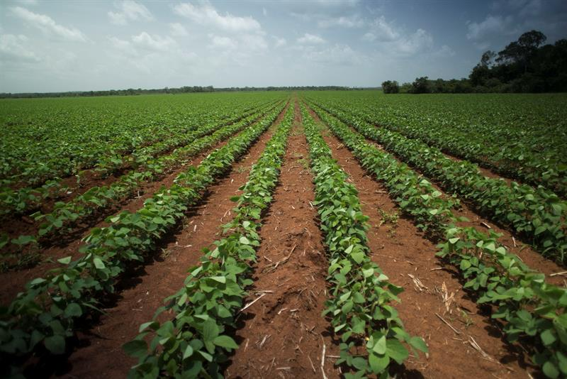 Transgenic soy, the cultivation of discord in the Mexican southeast